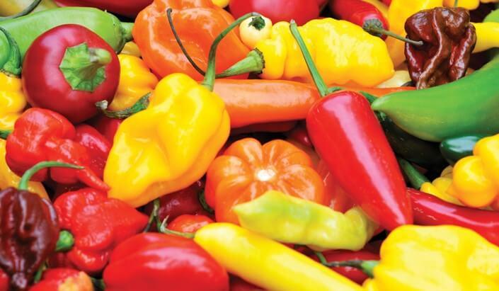 Chili Pepper Variety Use Benefits